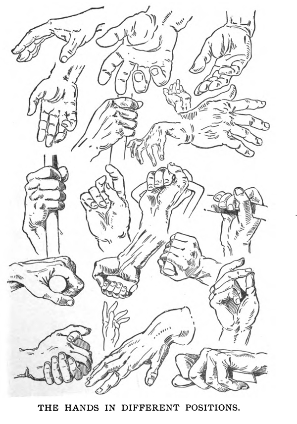 Drawing the Human Body & Figure by Memorizing Human ... Hands Holding Something Drawing