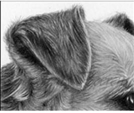how to draw fur drawing tutorials how to draw animals fur