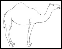 How to Draw Camels : Drawing Tutorials & Drawing & How to