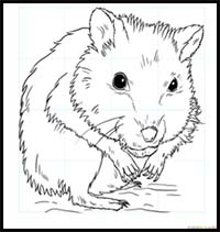 Fuzzy Hamsters Drawing