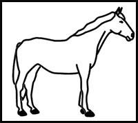 How to Draw Cartoon Horses & Realistic Horses : Drawing