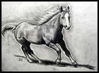 How to Draw Cartoon Horses & Realistic Horses : Drawing Tutorials