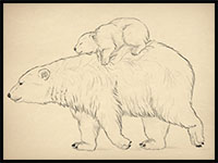 how to draw bears and pandas and their anatomy