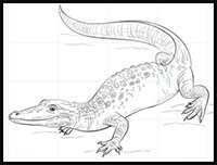 how to draw a realistic alligator