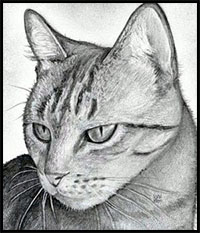 how to draw cartoon cats and kittens realistic felines drawing