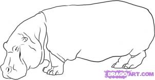 How To Draw Hippos Drawing Tutorials Drawing How To Draw