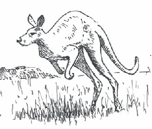 How To Draw Illustrated Kangaroos Jumping