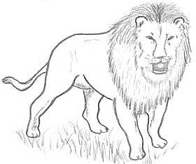 How to draw lions drawing tutorials amp drawing amp how to draw lion