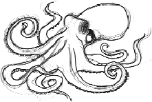Realistic octopus drawing images for Octopus drawing easy