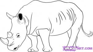 How to draw rhinos drawing tutorials drawing how to draw how to draw rhinos ccuart Gallery