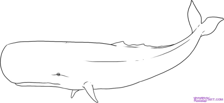 how to draw whales   drawing tutorials  u0026 drawing  u0026 how to