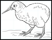 How To Draw Birds Drawing Tutorials Drawing How To Draw Birds