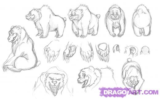 How To Draw Bears Drawing Tutorials Drawing How To Draw Bears