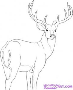 How to Draw Deer : Drawing Tutorials & Drawing & How to Draw Deer ...