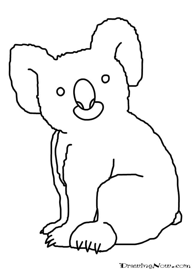 Line Drawing Koala : The gallery for gt koala drawing kids