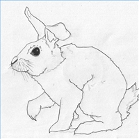 how to draw a realistic bunny with a bended ear