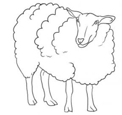 how to draw a sheep drawing sheep lambs tutorials