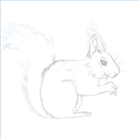 How to Draw Squirrels Drawing Tutorials Drawing How to Draw
