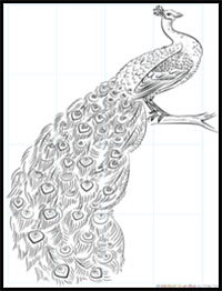 How To Draw Peacocks Drawing Tutorials Drawing How To Draw