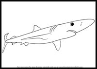 How To Draw Cartoon Sharks Realistic Sharks Drawing Tutorials Drawing How To Draw Sharks Drawing Lessons Step By Step Techniques For Cartoons Illustrations