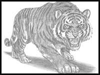 f2060caae9932 How to Draw Cartoon Tigers & Realistic Tigers : Drawing Tutorials ...