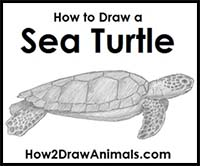 How To Draw Cartoon Turtles And Tortoises Realistic Turtles And