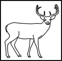 How To Draw Deer Drawing Tutorials Drawing How To Draw Deer Bucks Doe Drawing Lessons Step By Step Techniques For Cartoons Illustrations Sketching