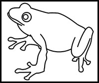 How To Draw Frogs Drawing Tutorials Drawing How To