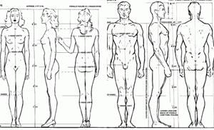 human figure drawing tutorial