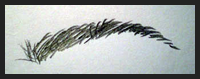 Eyebrows Drawing Lessons Tutorials For How To Draw Eye Brows Step