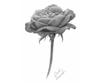 pencil shading blending drawing lessons techniques how to draw