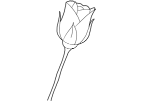 How To Draw Roses With Easy Step By Step Valentine S Day Drawing