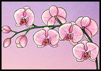 The Complete Orchid Drawing Tutorial in One Image