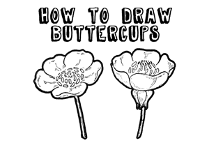 drawing buttercups step by step lesson