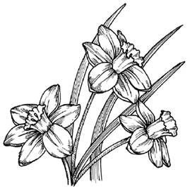 How To Draw Flowers Drawing Tutorials Drawing How To