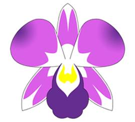 How to Draw Orchid Flower