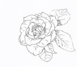 How to Draw Rose with Fiber Tip Pen