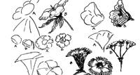 Drawing Flowers & Plants & Weeds