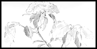 Learn how to Draw Flowers & Leaves with the Following Lesson