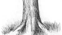 Drawing Bark How To Draw Tree Bark With Drawing Lessons Step By