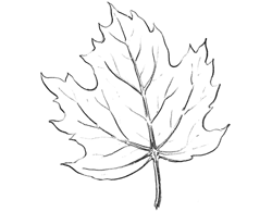 Drawing A Leaf How To Draw Leaves Structure With Drawing Lessons