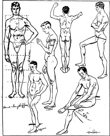 proportions & measurements of human body including men, women, Muscles