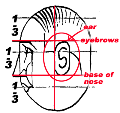 "Within the second half will be the ear, starting at the center line, ""C""-shaped, covering two-thirds of this area."