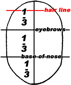 The first third will be the location of the line of the eyebrows, the second third the base line of the nose. Of the top third, the upper third of that will be the line of the hair.