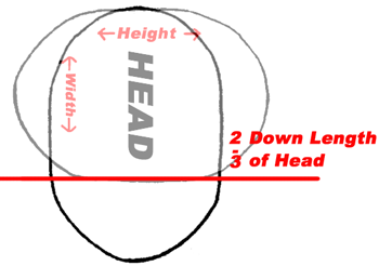 As a rule the width of the head is two-thirds that of its length.