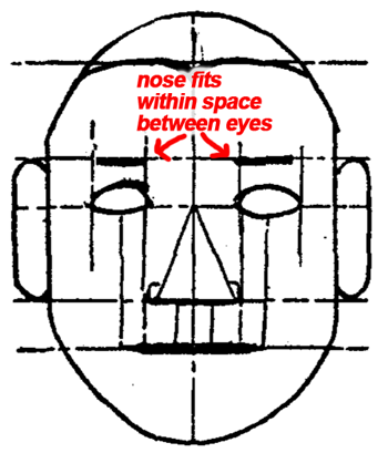 In a front view it is easy to locate the width of the nose—it is exactly within the space between the eyes.