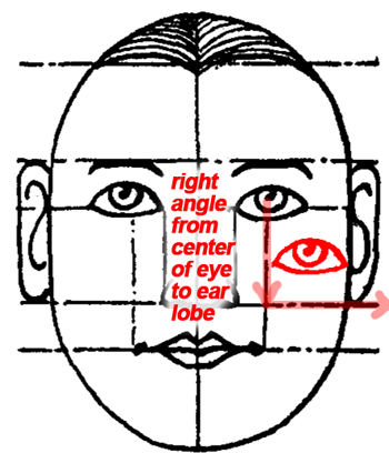 as the eyes are an eye's width apart, the nose (base) is an eye in width, and directly below in the intervening space.