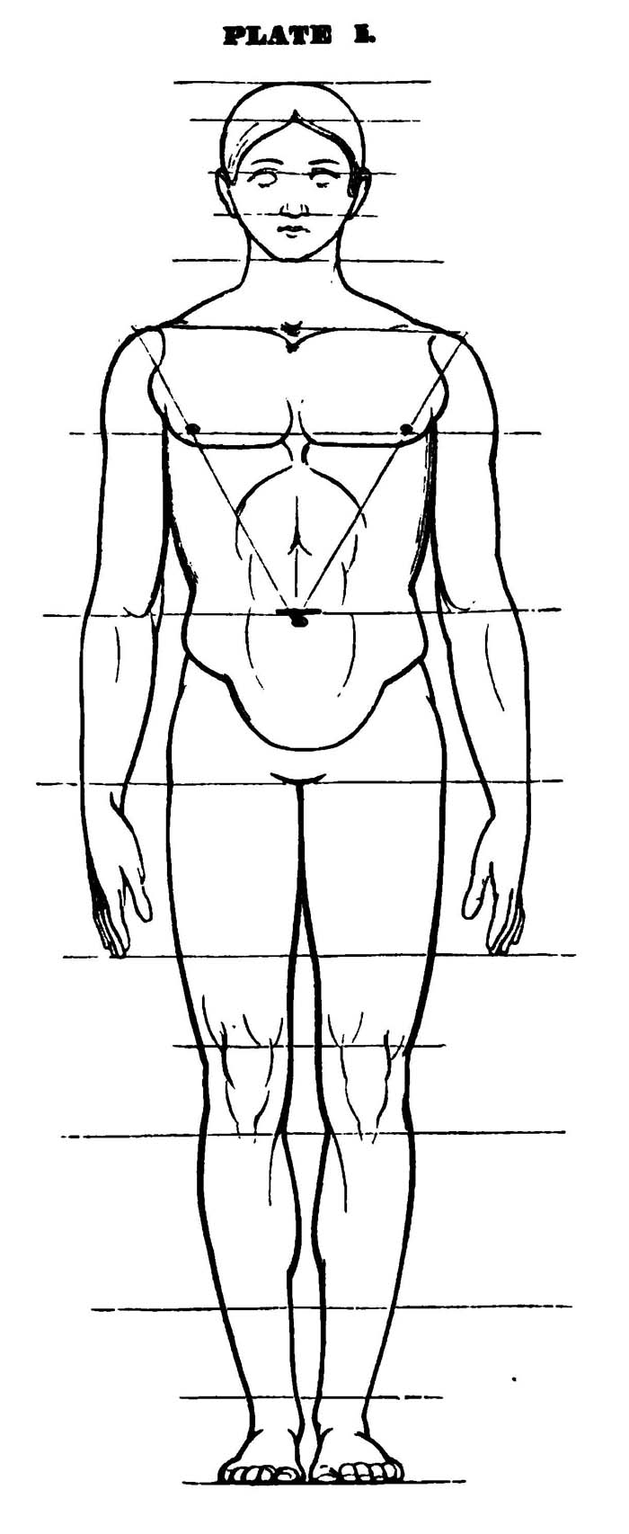 Drawing The Human Head   Face  And Body In The Correct Proportions   Body And Face Drawing