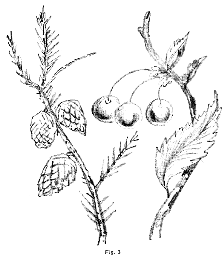 B learn how to draw fern leaves plants step by step for Easy flower drawing tutorials