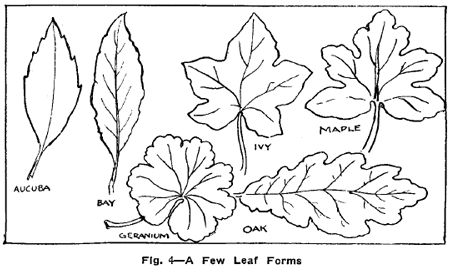 Flower Leaves Drawings Drawing Flowers Plants Weeds And